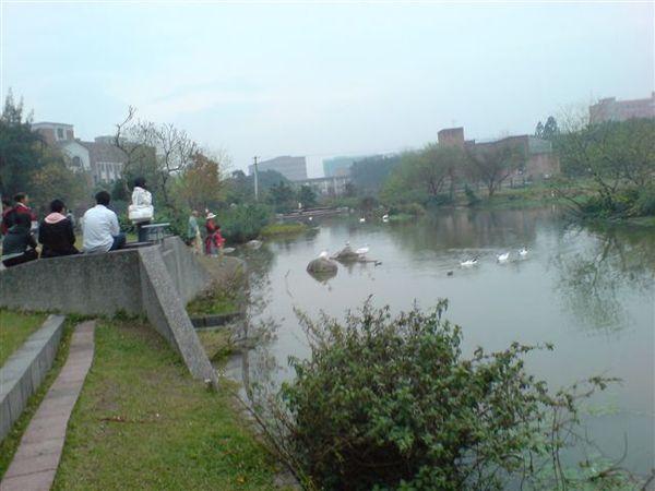 小孩很嗨的想衝進水裡跟鴨子玩耍
