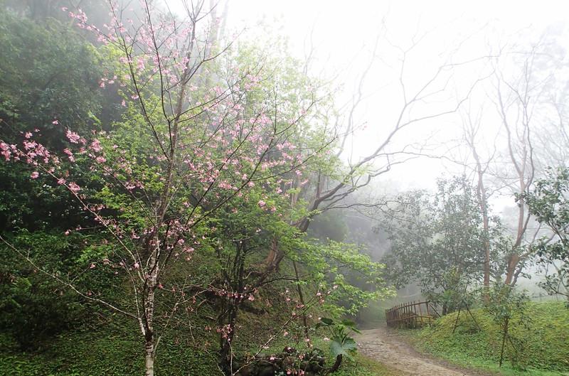終於看見一顆不知名的樹開花了