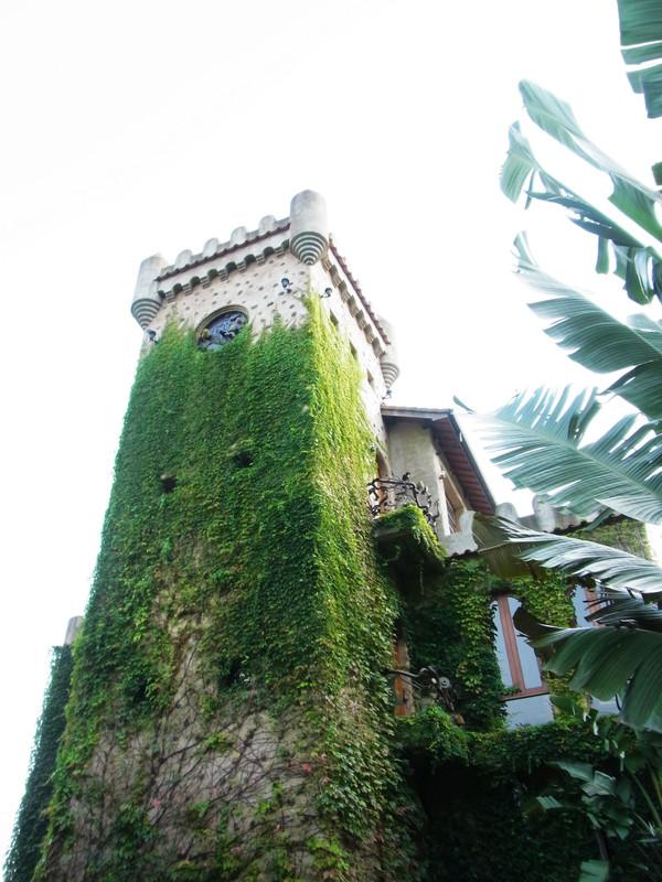 攀在古堡上的植物種的真好^_^