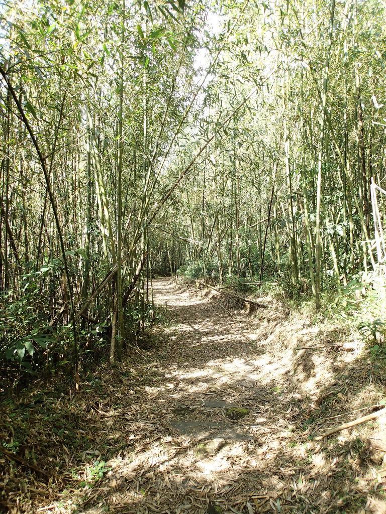 接著就是竹林裡的平路囉!霧之道總長度800m