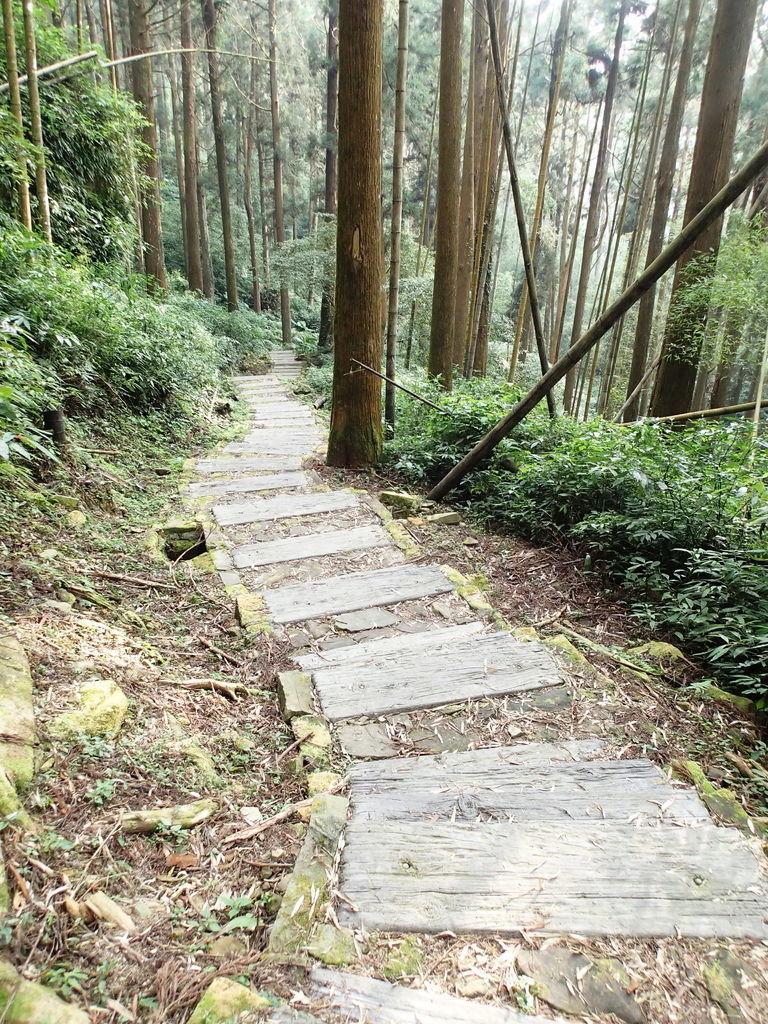 在休憩平台區繼續往下走有左右岔路..請走左邊下坡..水泥石階梯