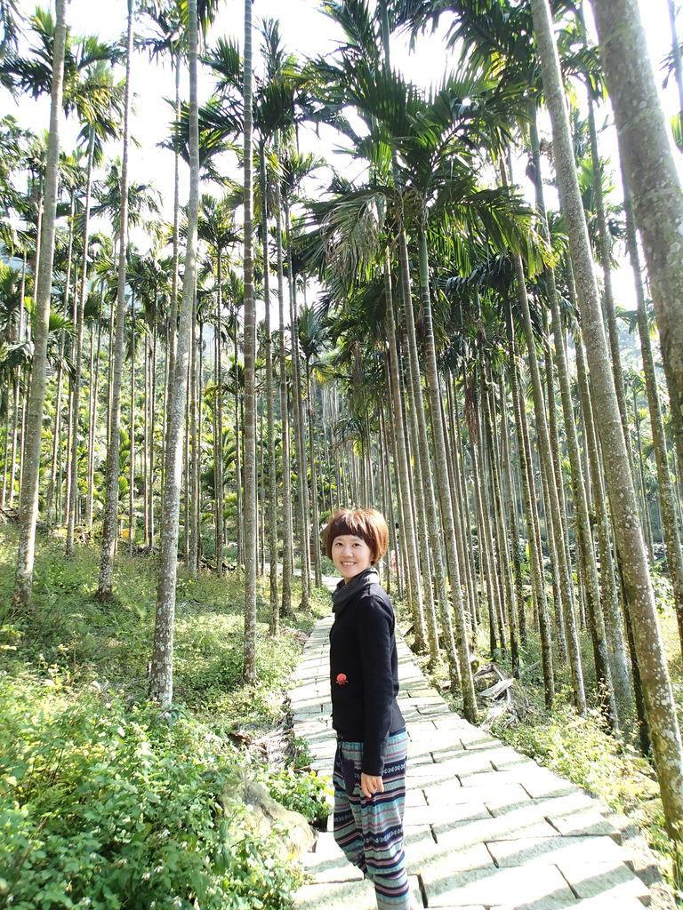 雖然是檳榔樹還是要拍得很唯美阿!