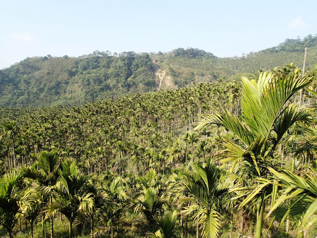 上去後就是看台灣特有種.檳榔樹.
