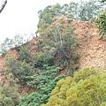 火炎山幾乎是草木不生.但馬尾松竟然能在火炎山的土質上生長
