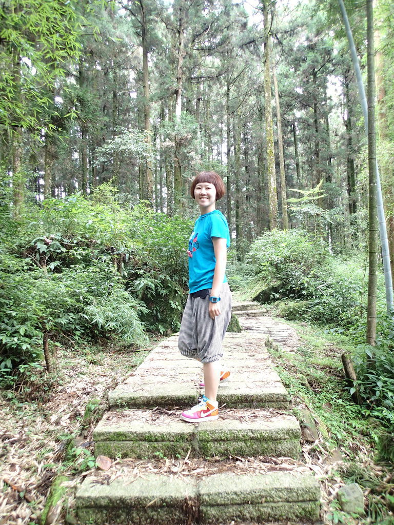 沿途都在竹林內.階梯平緩好走