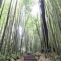 走在竹林內就相當舒服了
