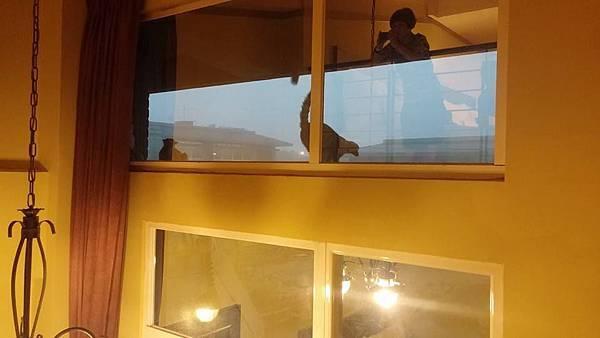 看看窗戶外就有環尾狐猴了.好high阿!