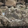 佳樂水被珊瑚覆蓋的岩石.jpg