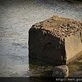 佳樂水巧顆粒石.jpg