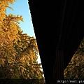 雍和宮銀杏葉及反射.jpg