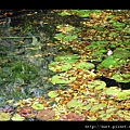 turtle11.jpg