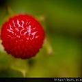 蛇莓02.jpg