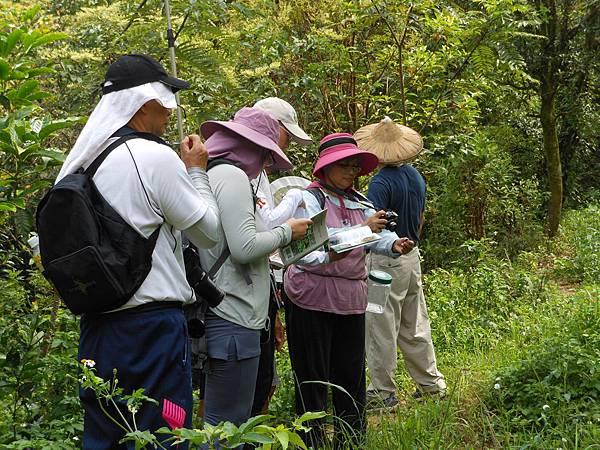 四分尾山森態萬花筒-蝴蝶自然資源調查