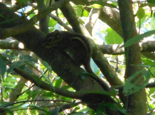 四分尾山森態萬花筒-動物-條紋松鼠