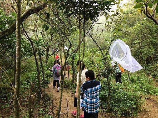 2014年10月25日四分尾山社區斑蝶、生態觀察與解說深根計畫