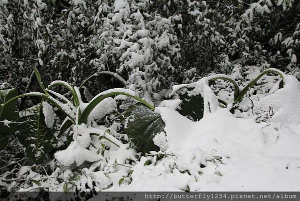 2016年1月24日霸王寒流造訪園區即景(植物篇)
