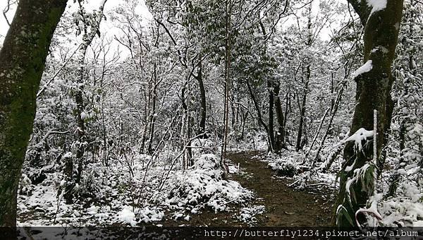 四分尾山森態萬花筒-雪景