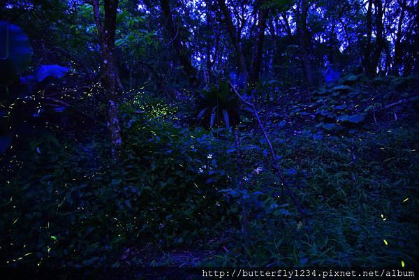2016年5月7日四分尾山社區躍動山林計畫