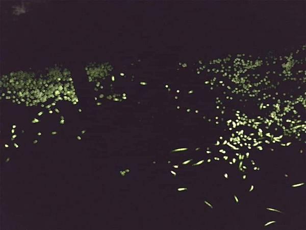 20200502夜觀_200503_0040.jpg