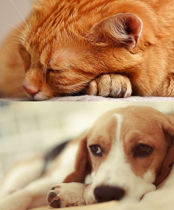 末期 犬 腎 不全