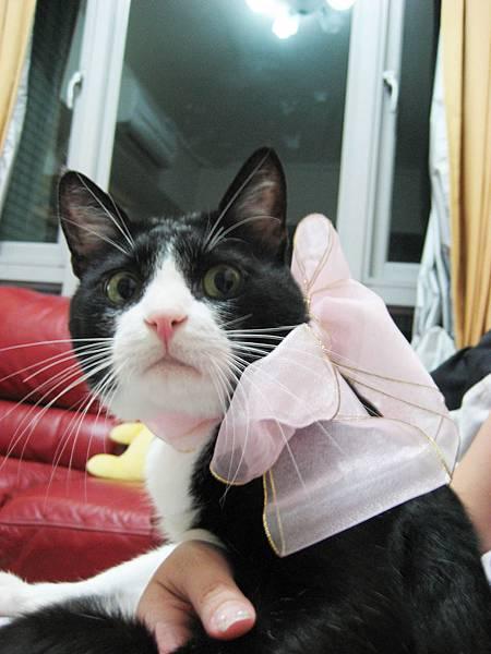姐姐你綁我緞帶要送走我嗎>_<