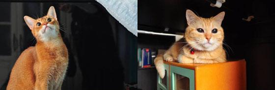 貓咪Banner.jpg