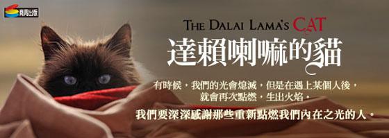 dalai_cat-eslite-560.jpg