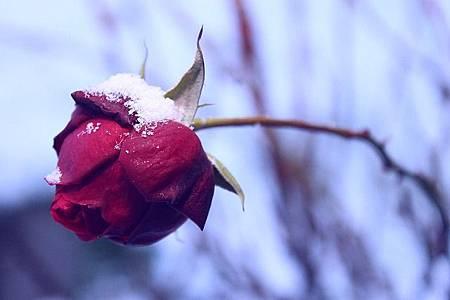 winter-1124770_640.jpg