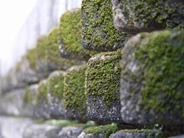 牆壁與青苔