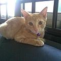 我愛的貓咪