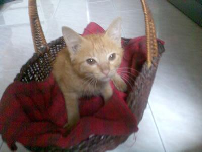 自己跑來我家的貓咪 Cute!!!