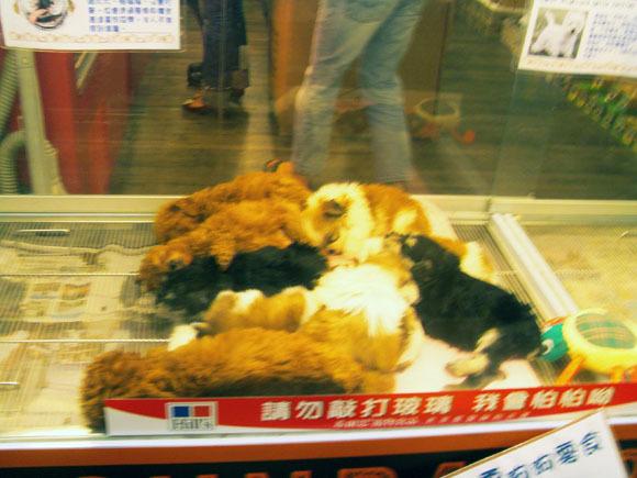 可愛的狗狗們