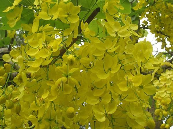 遍黃很漂亮