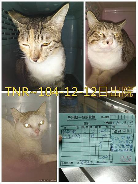 104-12-12出院3貓