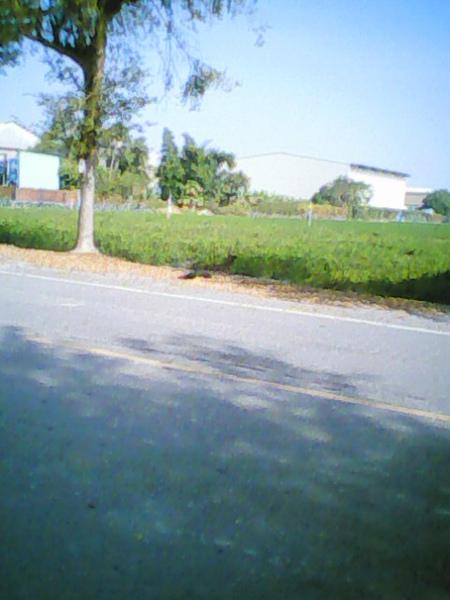 IMG0128A.jpg