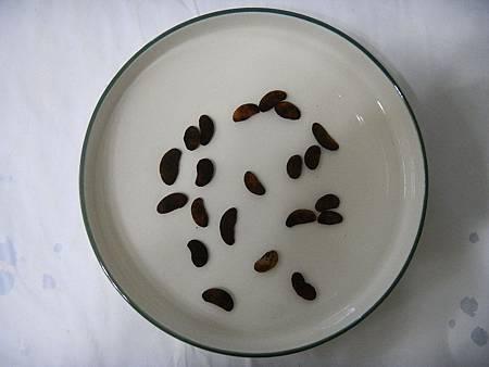 Garcinia indica seeds