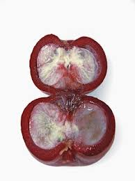 Garcinia indica