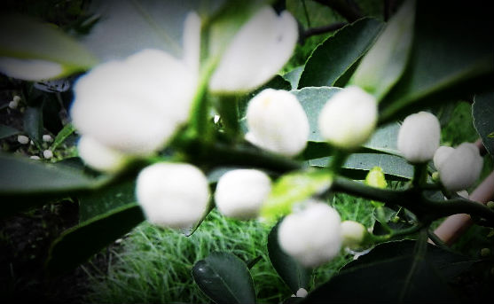 DSCN4293_webcamera360_20140309195222