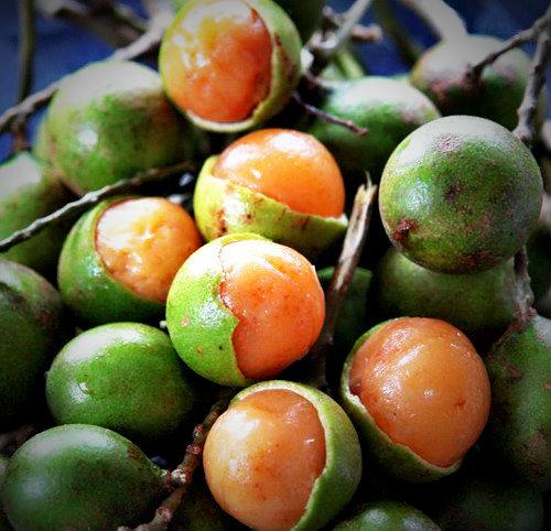 蜜莓455013024
