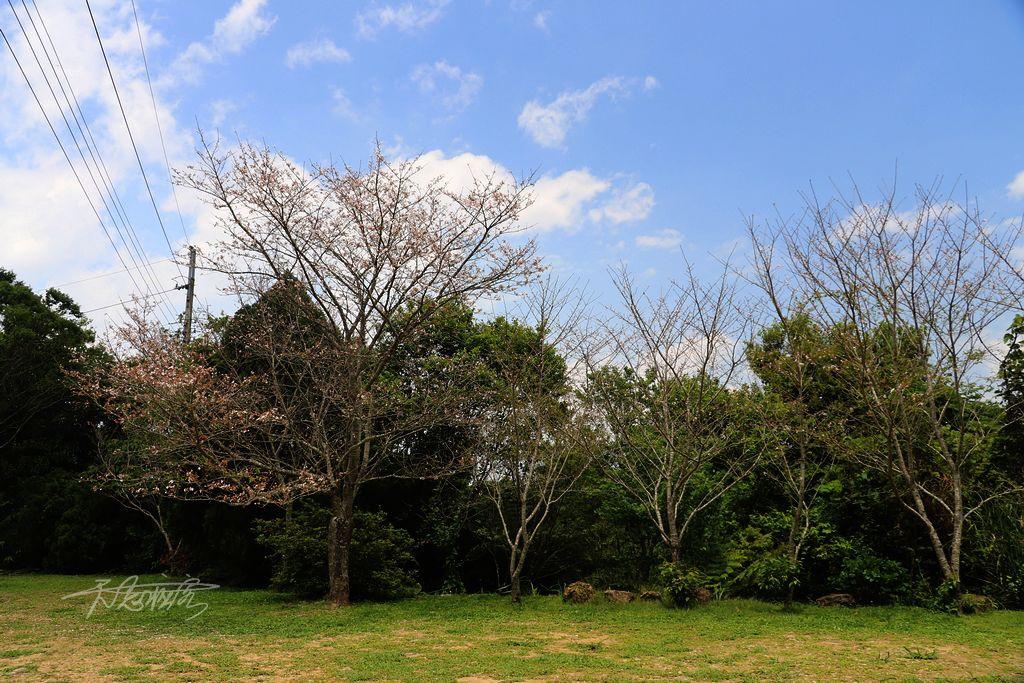 高山青農場