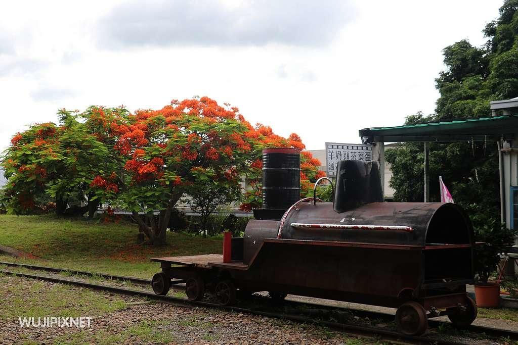 泰安火車站的鳳凰花樹