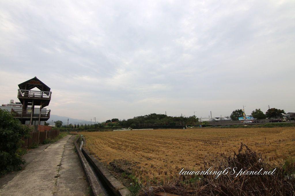 苑裡山腳彩繪稻田