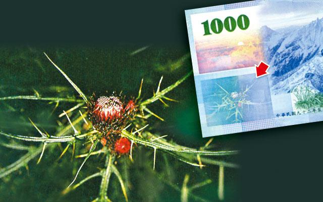 央行弄錯千元鈔上的植物?