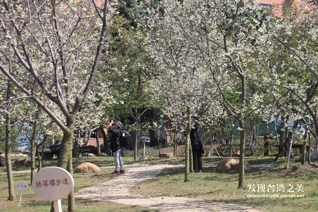 20190304崴立機電園區的綠萼櫻