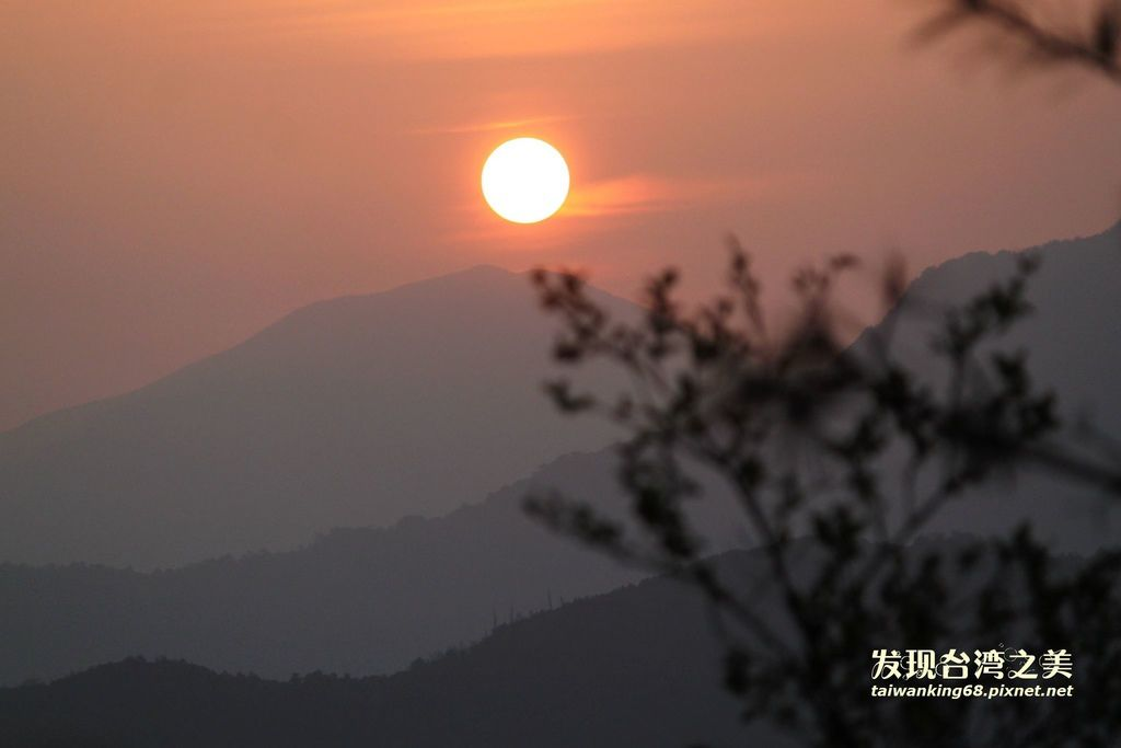 阿里山賞櫻記