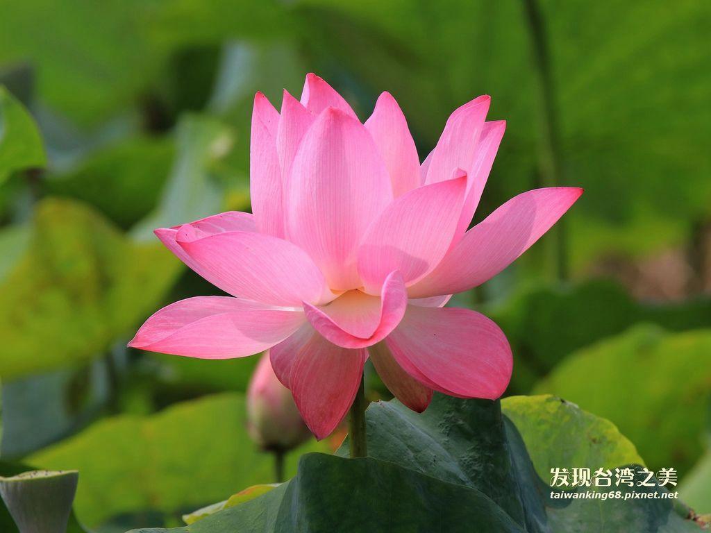 台灣12個月的開花情報