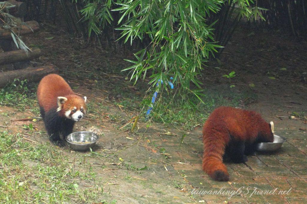 四川熊貓基地