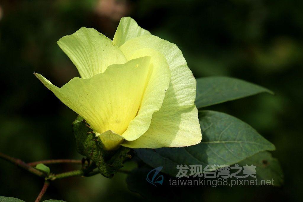 雅聞香草植物園