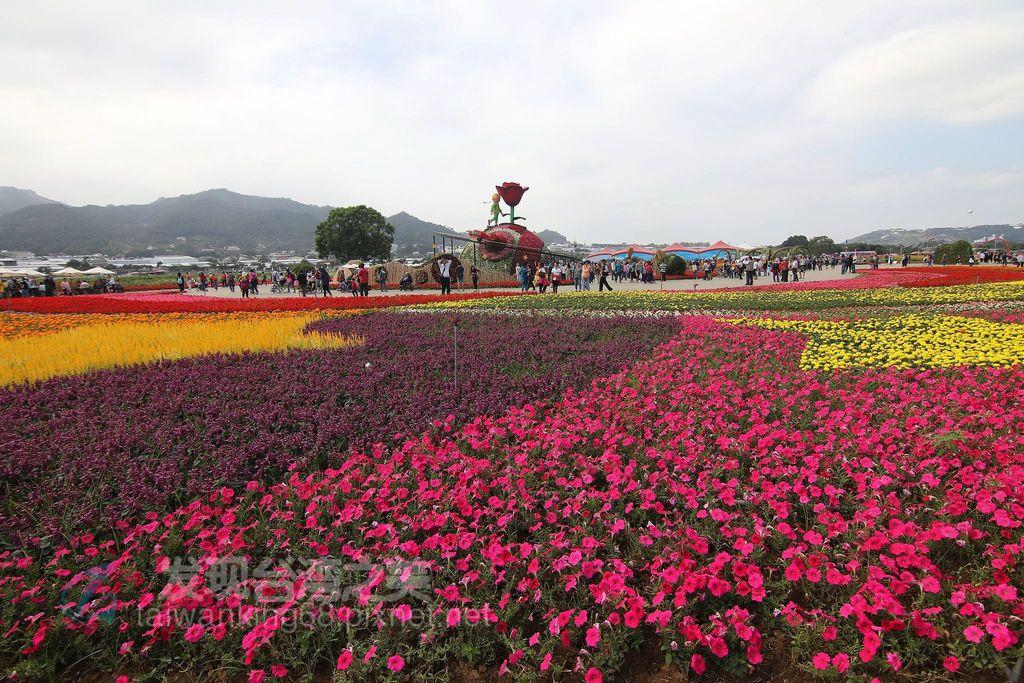 2019台中新社花海節