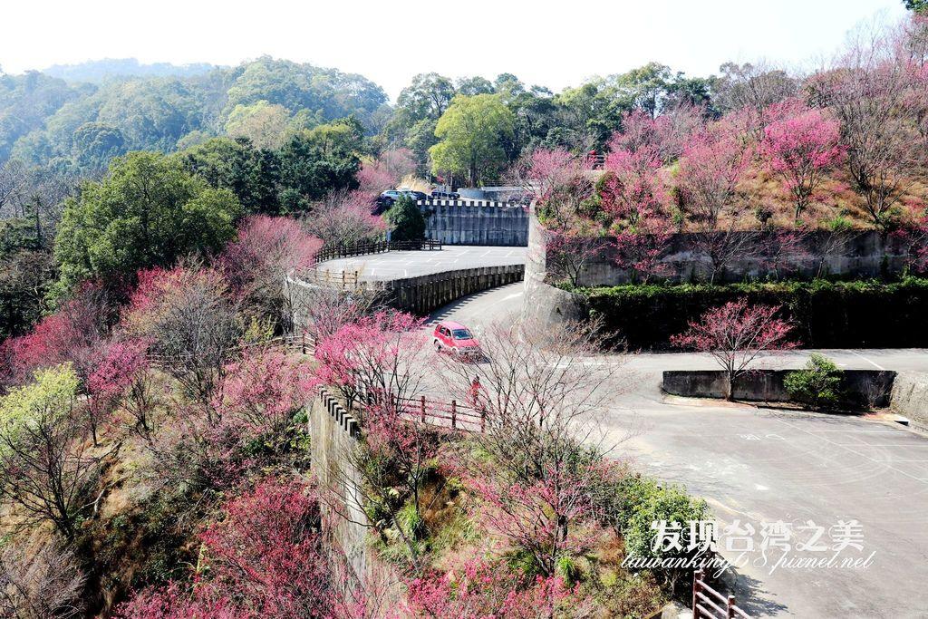 斜雲宮櫻花